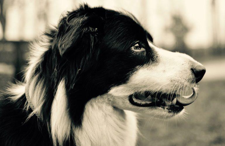 Urlaub mit Hund Ostsee Fischland Darss